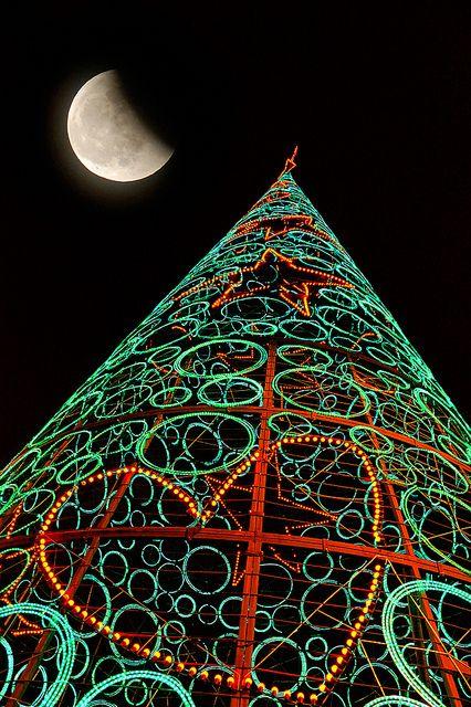 Christmas Tree, Madrid