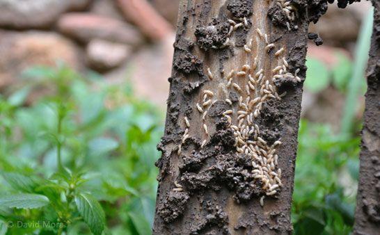 cómo eliminar termitas