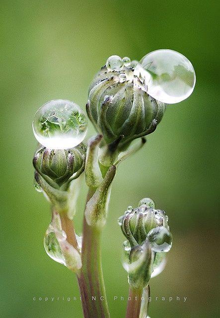 Dew Drops on flowers- so pretty!