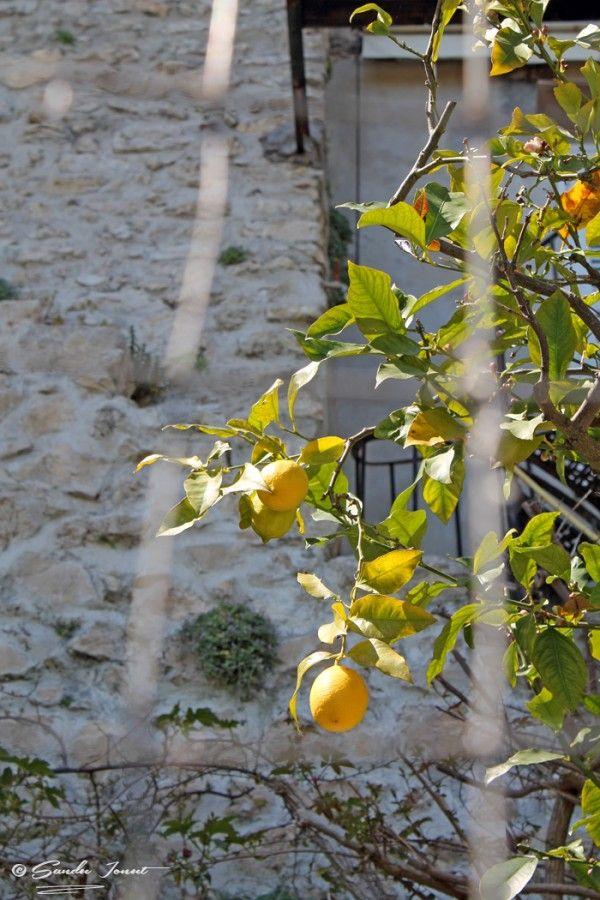 Lemons in Sperlonga, Italia