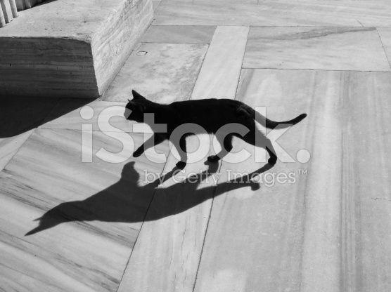 Wild Black Cat-bw royalty-free stock photo