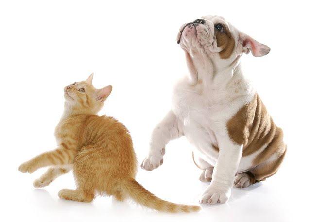 Pet Sitting: 2 ταινίες για σκύλους και γάτες που θα τα βοηθήσου...