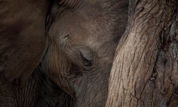 Stunning Photos Of Elephants Could Have Huge Impact On Their Future