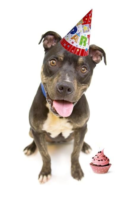 "SPCA PARTY - Be a ""PARTY ANIMAL"" at the Fredericton SPCA! Celebrate your birthday at the Fredericton SPCA. Kids enjoy a private ""behind-the-scenes"" tour of the shelter (psst… where the public normally isn't allowed to go), an animal-themed craft & a chance to meet our animals for adoption! http://frederictonspca.ca/birthday-parties/"