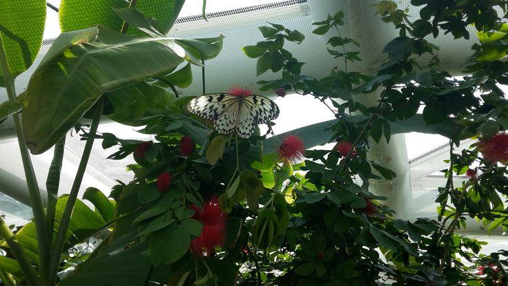 Konya Kelebekler Vadisi