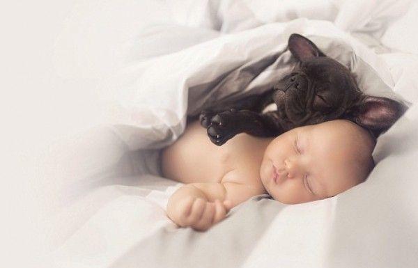 9. Dilan als hoofdkussen - Baby en Franse bulldog gaan met elkaar om als broertjes  - Nieuws - Lifestyle