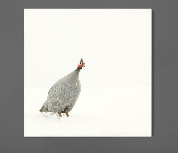 Guinea Hen in the Snow Feather Art Bird Art 12x12 Archival Photograph. Lucy Snowe via Etsy.