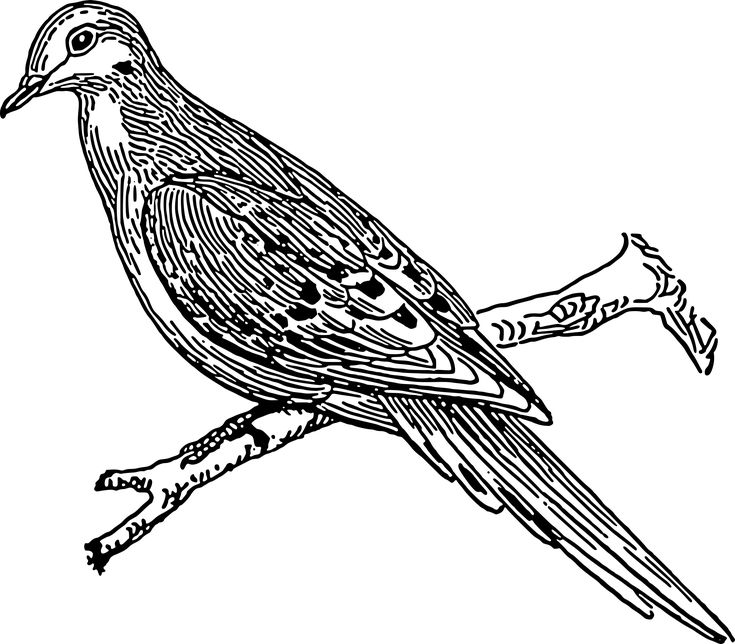 "dove by @papapishu, Source: <a href=""http://commons.wikimedia.org/wiki/File:Dove_(PSF).png""> Wikimedia Commons </a> <br><br>This image was donated by Pearson Scott Foresman, an educational publisher, to Wikimedia Commons, and is thereby in the Public Domain., on @openclipart"