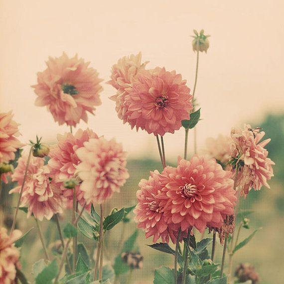 1660 Best Flowers Images On Pinterest