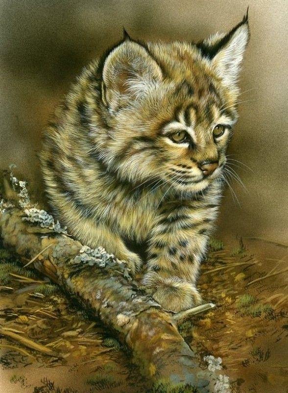 Bob Cat kitten2 by REBECCA LATHAM