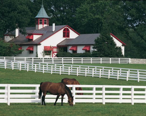 Anyone who is familiar with Lexington knows what farm this is - Calumet Farm off of Versailles Road, sits along side Keeneland Race Track.