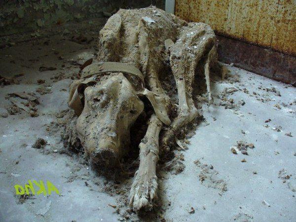 В одной из припятских квартир  Chernobyl exclusion zone.   https://www.facebook.com/pripyat.a.ghost.town/