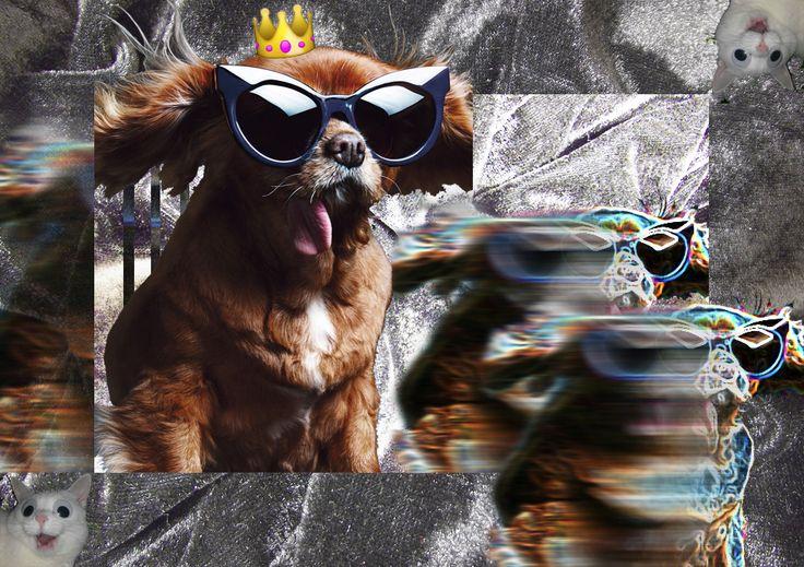 #karenwalker #dog #fashion