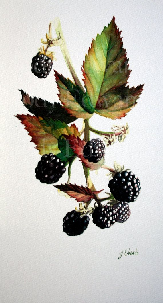 Blackberries    This is a limited edition print of the Original Watercolour Blackberries. This is printed on watercolour paper and is a limited edition