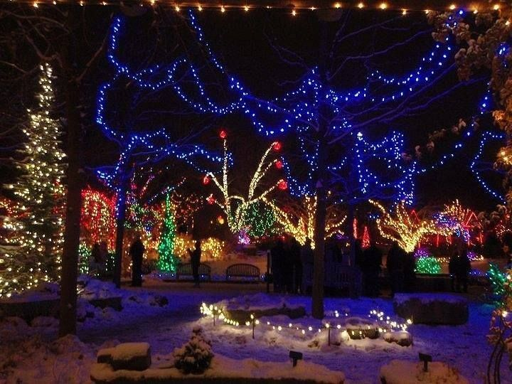 17 Best Images About Christmas Lights On Pinterest Trees