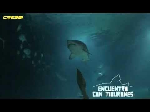 Encuentro con tiburones. En el Oceanogràfic.
