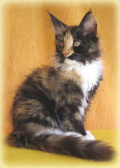 kittens for adoption mn