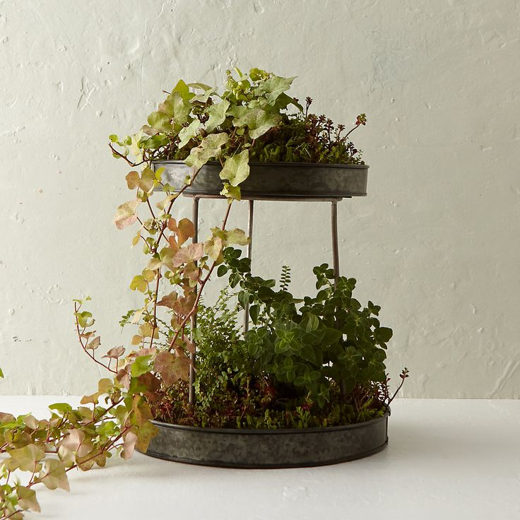 Silver Footed Plant Stand