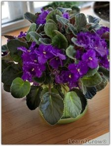 winter blooming houseplants offer solace to many gardeners suffering through the cold months