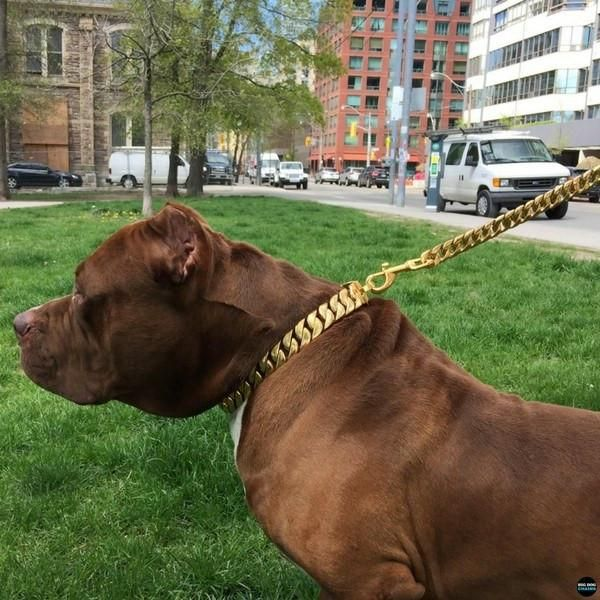 Suburban Gold Cuban Link Luxury Lead for Large Strong Dogs Pit Bull Lead Chain Leash XL Bully Lead Gold Leash Stylish for Rottweiler Doberman Leash and Luxury High Quality and Gold Dog Collars - BIG DOG CHAINS - 2