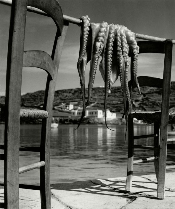 GREECE. Ionian island of Corfu. 1938. Octopus.