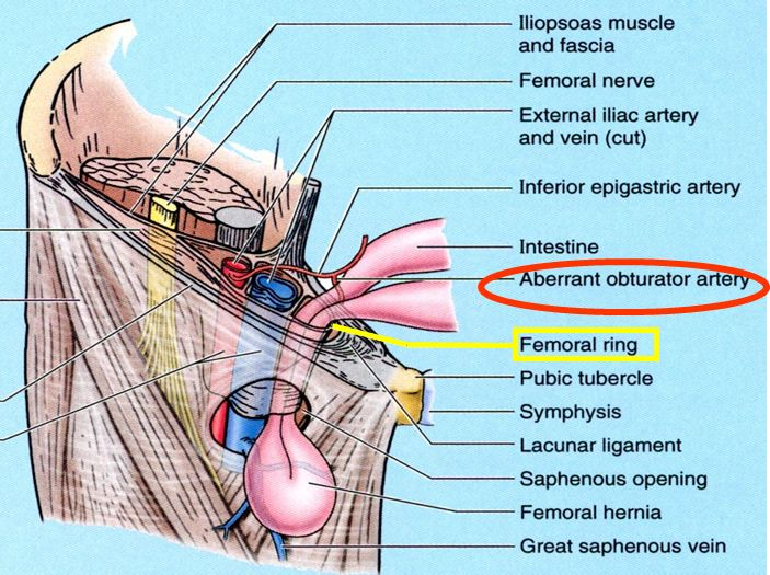 511 best images about chirurgie on pinterest | medical, anatomy, Muscles