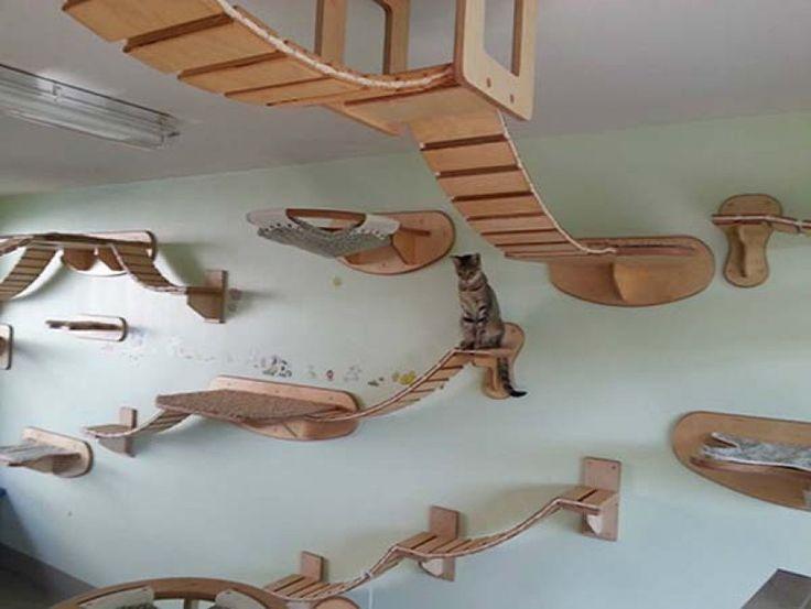 Quando un felino è il re della casa. Anche i gatti possono avere un appartamento tutto loro, ma non con le zampe in terra, bensì su pareti e soffitto. L'azienda tedesca Goldtatze.de è specializzata nella realizzazione di 'paradisi per gatti': accessori che si integrano con lo st