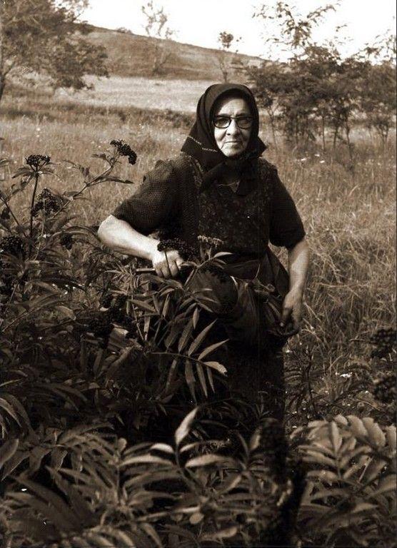 """""""Csete"""" (gyalogbodza lekvár) készítés a gyűjtéstől a bogrács kinyalásáig Baranyában 1970-ben."""
