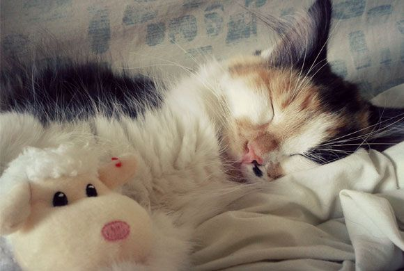 Somnic pufos, fotografie de Beckitten