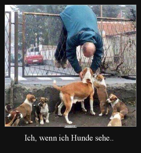 Ich, wenn ich Hunde sehe.. | Lustige Bilder, Sprüche, Witze, echt lustig