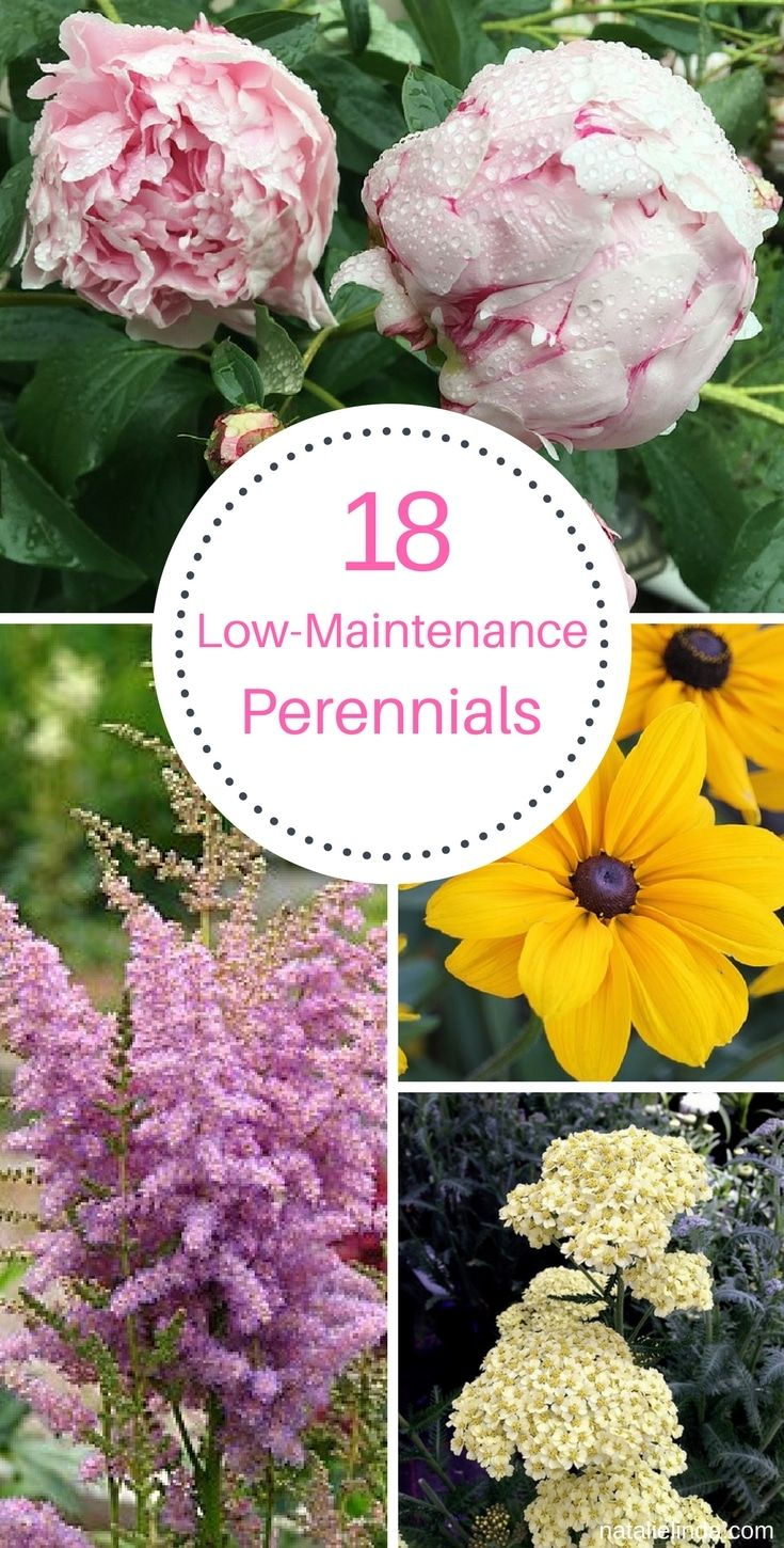 18 Low Maintenance Perennials With Images Flowers Perennials