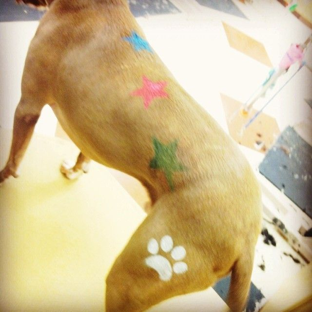 Show off your pet 39 s personality with new chalking for Dog grooming salons near me