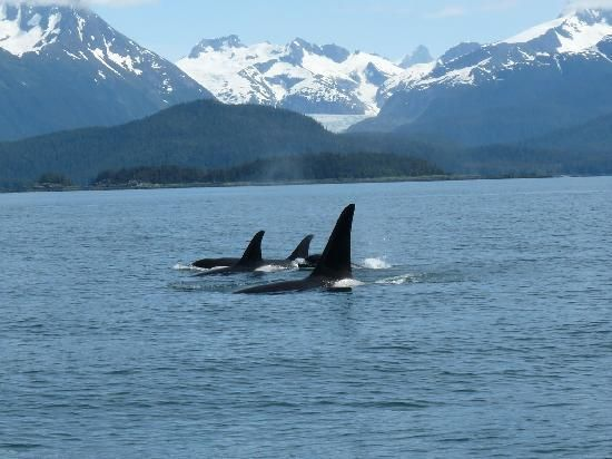 The whales in Juneau, Alaska!!!