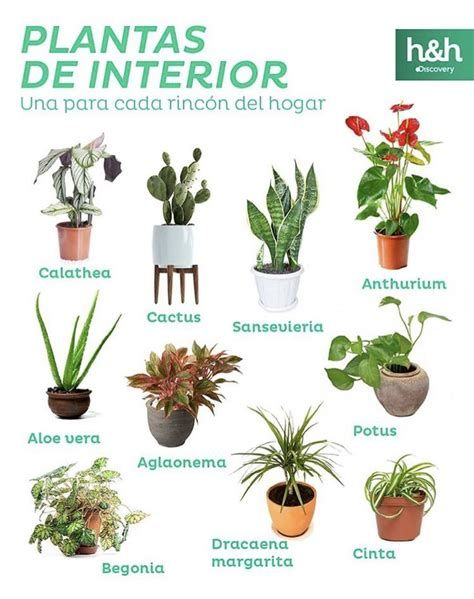 House Plants Decor, Plant Decor, Indoor Garden, Indoor Plants, Plant Magic, Small Courtyard Gardens, Inside Garden, Decoration Plante, Cactus