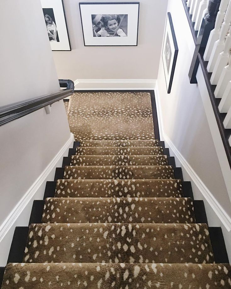 Looking For Stair Carpets And Runners From Classic Stripes To Fun Polka Dot Designs We Ve Picked A Select Animal Print Carpet Rugs On Carpet Carpet Staircase