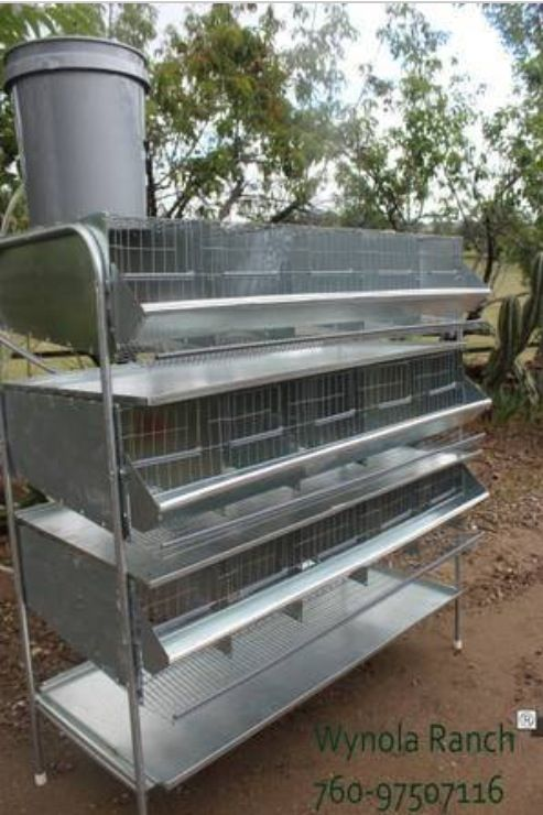 quails cage - photo #48