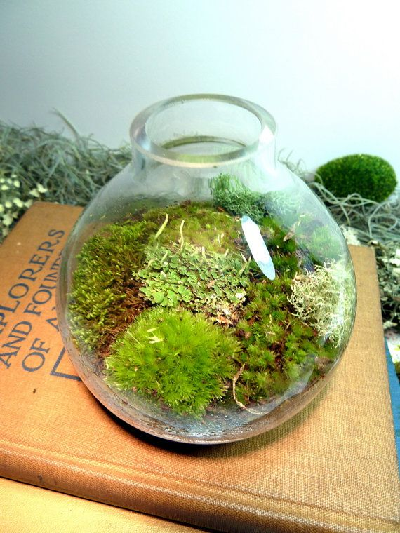 TERRARIUM, Small Table Vase, Glass, Moss, Lichen. Great for HOME or OFFICE.  Nice Unusual Gift. Terrariums by mossterrariums on - 18 Best Terrariums My New Obsession Images On Pinterest