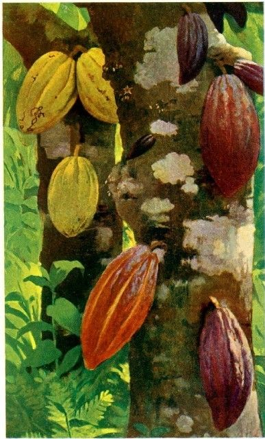Cacao - we love chocolate too!