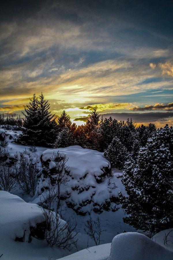 ~~Winter Forest in Reykjavik • Iceland • by Dagur Jonsson~~