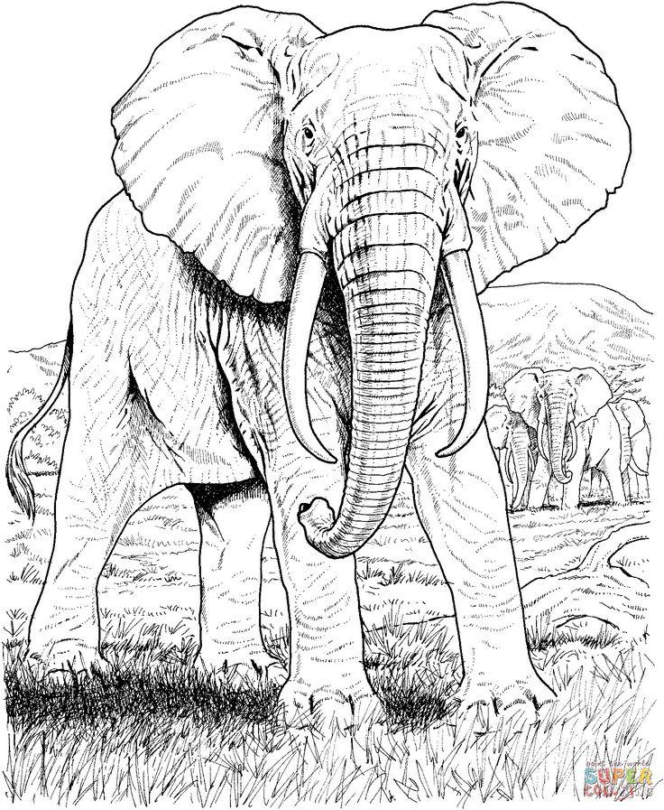 einzigartig malvorlagen tiere indien in 2020  elefanten