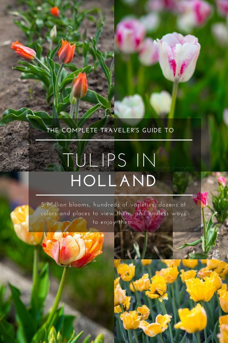 Explore The Tulips Of Holland S Tulip Time Festival Travel