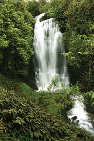 Waitanguru Falls Walk, Piopio, Waitomo, NZ.jpg