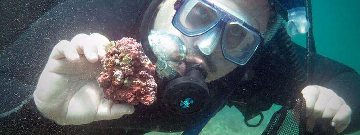 Rafael Riosmena Rodríguez, un enamorado de la biología marina