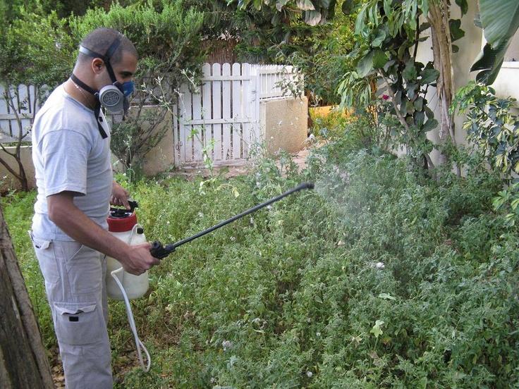 ריסוס ירוק לפינות צמחיה