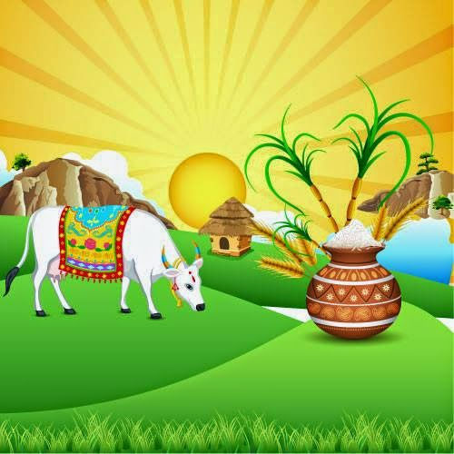 Image result for sankranti wishes