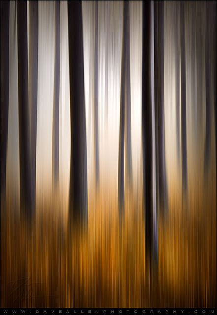 Forest Essence - Vertical Panning Abstract Photography by Dave Allen Photography, via Flickr