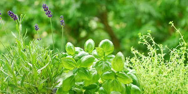 12 piante che colorano il giardino e tengono lontani gli insetti