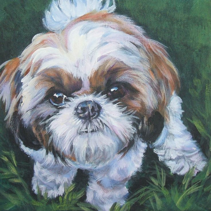 shih tzu art print CANVAS print of LA Shepard by TheDogLover, $39.99