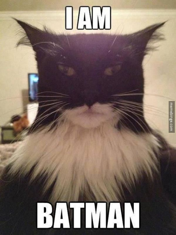 Family cat by day, Batman by night