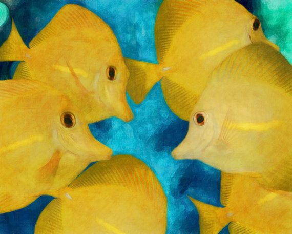61 best images about tropical fish on pinterest tropical for Yellow tropical fish